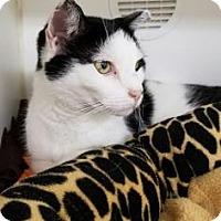 Adopt A Pet :: Emilio - Reisterstown, MD
