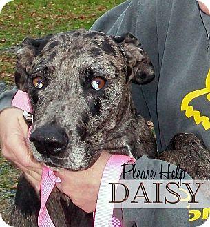 Dog Training Mechanicsburg Pa