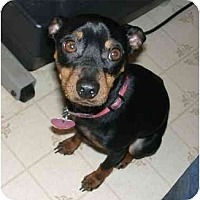 Adopt A Pet :: Bandit - Nashville, TN