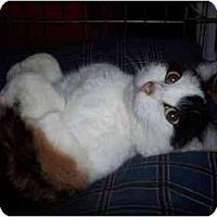 Adopt A Pet :: Haley - Delmont, PA