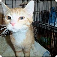 Adopt A Pet :: Zen - Catasauqua, PA