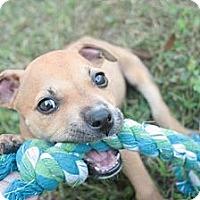 Adopt A Pet :: DJ - Stilwell, OK