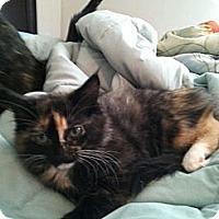Adopt A Pet :: Attie - Monroe, GA