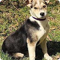 Adopt A Pet :: Innis - Brattleboro, VT