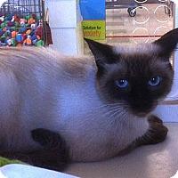 Adopt A Pet :: Princess D. - Sacramento, CA