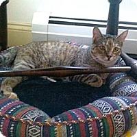 Adopt A Pet :: Tiega - Portland, ME