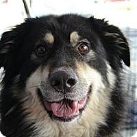 Adopt A Pet :: Paisley (AKA BAILEY) - Rockaway, NJ