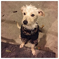 Adopt A Pet :: Emma - San Francisco, CA