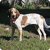 Adopt A Pet :: Farrah - Virginia Beach, VA