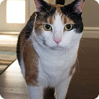 Adopt A Pet :: Cally - Edmonton, AB