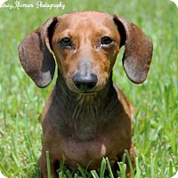 Adopt A Pet :: Tripp - Weston, FL