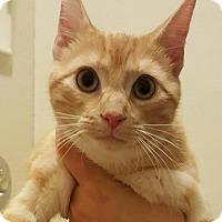 Adopt A Pet :: Porky - Devon, PA
