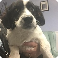 Adopt A Pet :: Josiah - Rocky Mount, NC