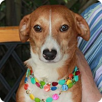 Adopt A Pet :: Trixie - Garfield Heights, OH
