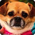 Adopt A Pet :: Gizzy