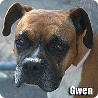 Adopt A Pet :: Gwen - Encino, CA
