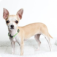 Adopt A Pet :: Ginger - Oakland, CA