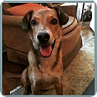 Adopt A Pet :: MARSHALL