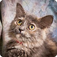 Adopt A Pet :: RHEA - Anna, IL
