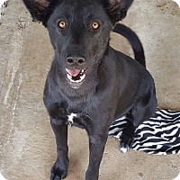 Adopt A Pet :: Pearlie in CT - Manchester, CT