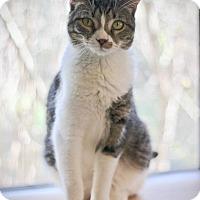 Adopt A Pet :: Mitsi - San Antonio, TX