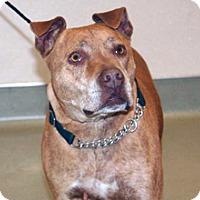 Pit Bull Terrier Mix Dog for adoption in Wildomar, California - Reziner