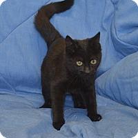 Adopt A Pet :: WINSTON - New Iberia, LA