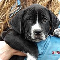 Adopt A Pet :: Tallula (11 lb) Video! - Sussex, NJ