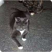Adopt A Pet :: Smokey - Morgan Hill, CA