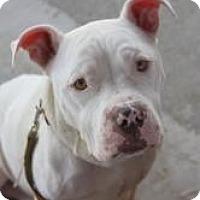 Adopt A Pet :: Calista - Dover, OH