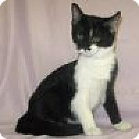 Adopt A Pet :: Lita - Powell, OH