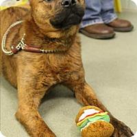 Adopt A Pet :: Chase - Manhasset, NY