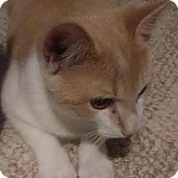 Adopt A Pet :: Sunny - Burlington, NC