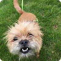 Adopt A Pet :: Yp litter - Magnolia (mom) - Livonia, MI