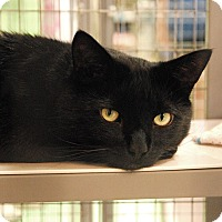 Adopt A Pet :: Nelson - Winchendon, MA
