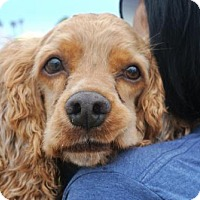 Adopt A Pet :: Morgan - Sherman Oaks, CA