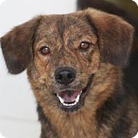 Adopt A Pet :: DUSTY - Kyle, TX