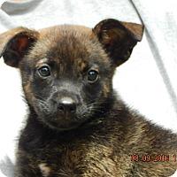 Adopt A Pet :: Jinx (5 lb) Video! - SUSSEX, NJ