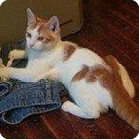 Adopt A Pet :: SUNNY - Hampton, VA