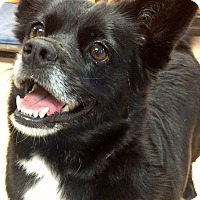 Adopt A Pet :: Happy Penny!! - Ft Myers Beach, FL