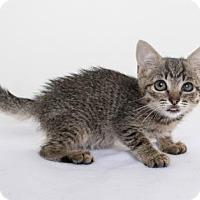 Adopt A Pet :: Holly - Chico, CA
