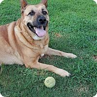 Adopt A Pet :: Lexi - Nashua, NH