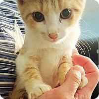 Adopt A Pet :: Lucy B - Capshaw, AL