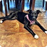 Adopt A Pet :: Audrey - Centerville, GA