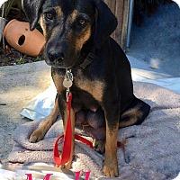 Adopt A Pet :: Mallory - Milton, GA