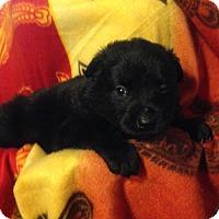 Adopt A Pet :: MOLLYS 7 - 4 - Colton, CA
