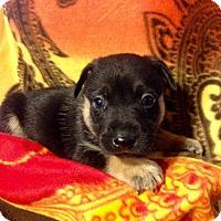 Adopt A Pet :: MOLLYS 7 - 5 - Colton, CA