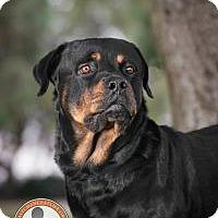 Adopt A Pet :: Blade - Oceanside, CA