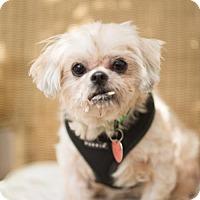 Adopt A Pet :: Jax - Tallahassee, FL