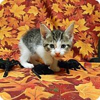 Adopt A Pet :: Valerie - Columbus, NE